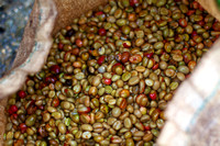 Coffee Beans After Wet Processing: Closeup