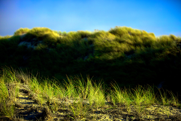 Waves of Green - Pismo Dunes, Oceano Dunes - Pismo Beach, CA